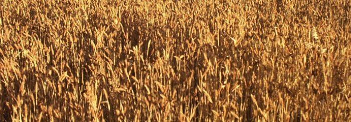 Avoiding GMO's
